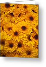 Cluster Of Yellow Blooms Greeting Card