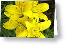 Cluster Of Yellow Lilly Flowers In The Garden Greeting Card