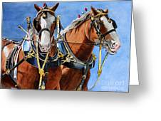 Clydesdale Duo Greeting Card