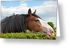 Clydesdale Horse Munching Greeting Card