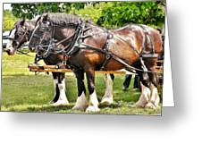 Clydesdale Horses Greeting Card