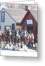 Clydesdales In Mystic Greeting Card