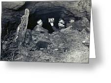 Coal Miners With A Canary Greeting Card