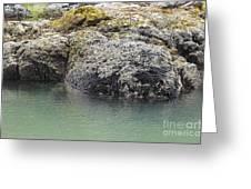 Coast Ecosystems Greeting Card