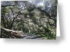 Coast Live Oaks Greeting Card