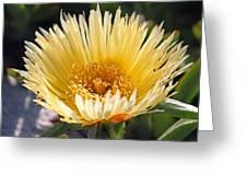Coastal Bloom II Greeting Card