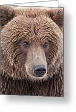 Coastal Brown Bear Closeup Greeting Card