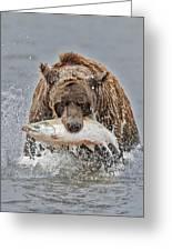 Coastal Brown Bear With Salmon IIi Greeting Card
