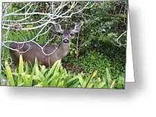 Coastal Deer Greeting Card