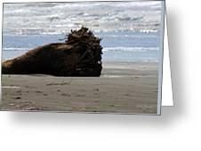 Coastal Driftwood Greeting Card