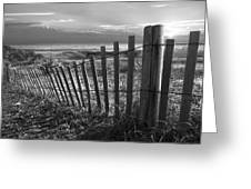 Coastal Dunes In Black And White Greeting Card