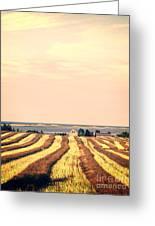 Coastal Farm Pei Greeting Card by Edward Fielding