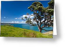 Coastal Farmland Landscape With Pohutukawa Tree Greeting Card