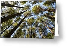 Coastal Forest Greeting Card