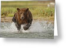 Coastal Grizzly Boar Fishing Greeting Card by Kent Fredriksson