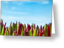 Coastal Ice Plant Greeting Card