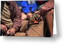 Coastal Maine Is Lobster Greeting Card