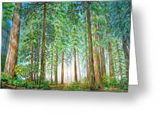 Coastal Redwoods Greeting Card