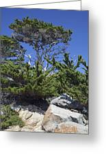 Coastal Trees In California's Point Lobos State Natural Reserve Greeting Card by Bruce Gourley