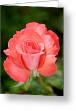 Cobra Rose  Greeting Card by Christine Till