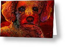 Cockapoo Dog Greeting Card