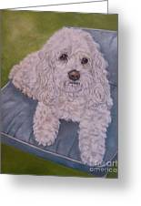 Cockapoo Greeting Card