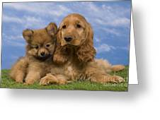 Cocker Spaniel And Pomeranian Greeting Card