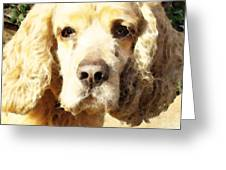 Cocker Spaniel Art - Mellow Yellow Greeting Card