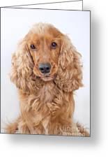 Cocker Spaniel Dog Portrait Greeting Card