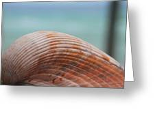 Cockle Shell Greeting Card
