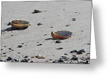 Cockle Shells On Little Island Greeting Card