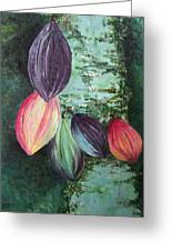 Cocoa Pods Greeting Card