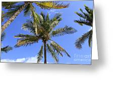 Cocoanut Palm Trees Sky Background Greeting Card