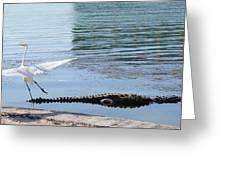Crocodile In Cancun Greeting Card