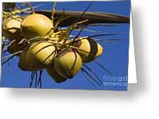 Coconut 1 Greeting Card
