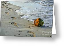 Coconut On The Sand Greeting Card