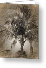 Coconut Palm Tree Greeting Card