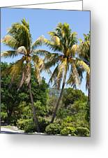 Coconut Palm Trees In Key West Greeting Card