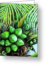 Coconut Tree   Sold Greeting Card