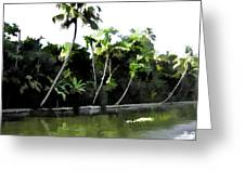 Coconut Trees And Others Plants In A Creek Greeting Card