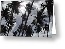 Coconut Trees In Barbados Greeting Card