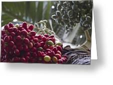 Cocos Nucifera - Niu Mikihilina - Palma - Niu - Arecaceae -  Palmae Greeting Card