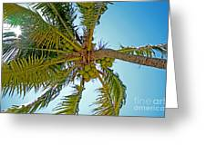 Cocos Greeting Card