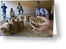 Coffee Beans Santo Domingo Greeting Card