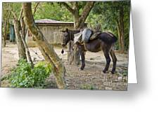 Coffee Country Dominican Republic Greeting Card