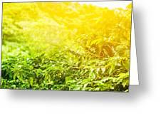 Coffee Plantation Sunny Background Greeting Card