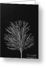 Cold And Lonely Greeting Card