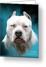 Cold As Ice- Pit Bull By Spano Greeting Card by Michael Spano