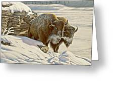 'cold Day At Soda Butte' Greeting Card
