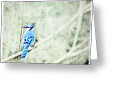Cold Day For A Blue Jay Greeting Card